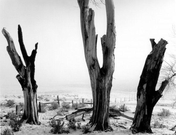 035-Dead-Trees-Carson-City-1960-600x462.jpg
