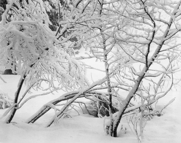 047-Locust-Trees-in-Snow-Yosemite-Valley-1929-600x473.jpg