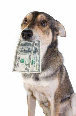 1307970954_money-dog.jpg