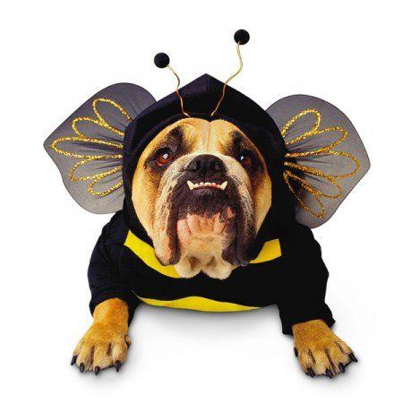1428480182_zelda-bumblebee-halloween-dog-costume-1.jpg