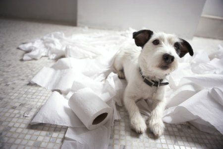 1435673726_dog-lying-on-bathroom-floor-600x400.jpg
