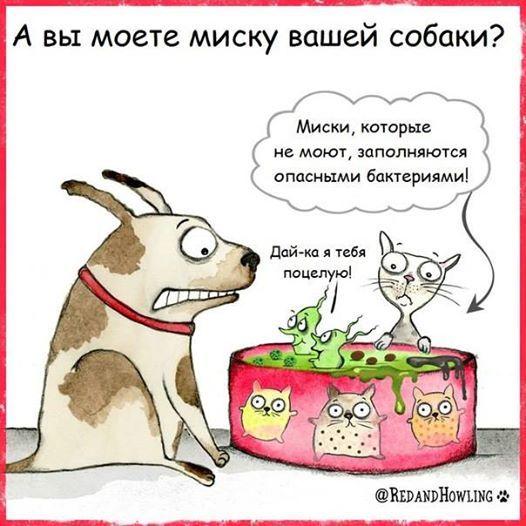163019264_n.jpg?_nc_cat=108&_nc_ht=scontent-frt3-2.jpg