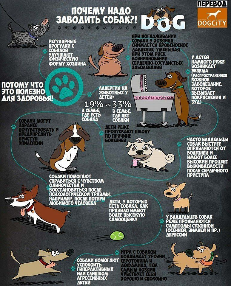 Мы и наши собаки