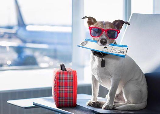 Поездки с собаками (правила ввоза и вывоза за рубе