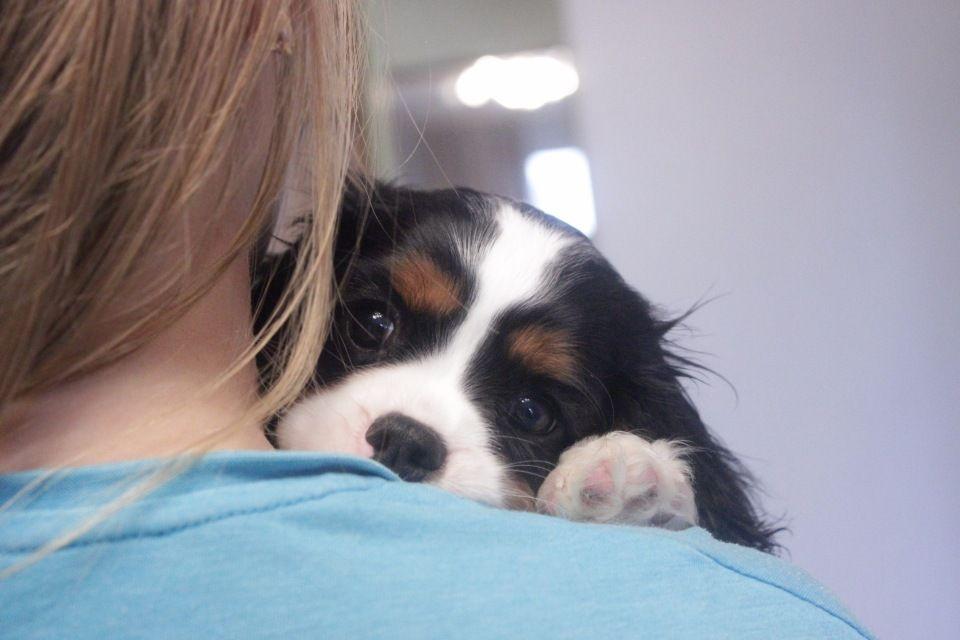 Предлагаем щенков