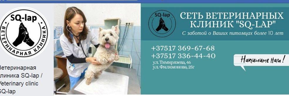 Ветеринарные вопросы и здоровье