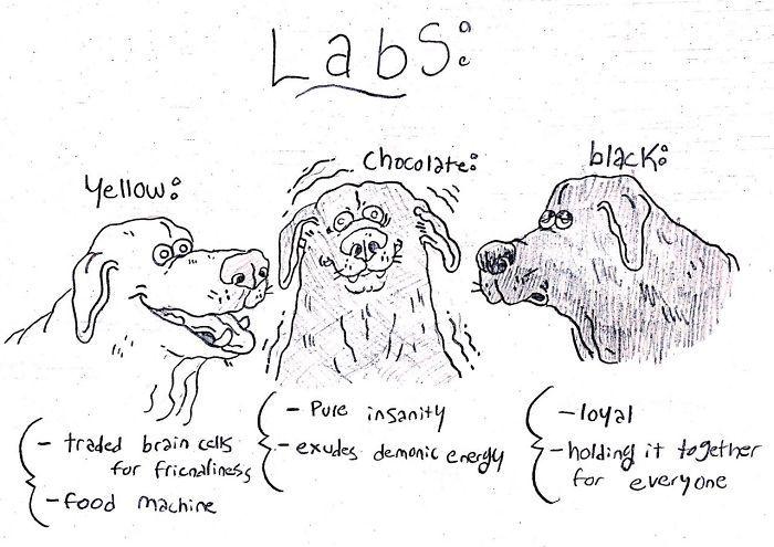 dog-breeds-traits-guide-cartoons-grace-gogarty-11-5a8a7c82482a3__700.jpg