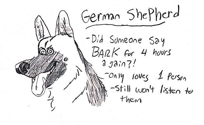 dog-breeds-traits-guide-cartoons-grace-gogarty-15-5a8a7c8b3e021__700.jpg