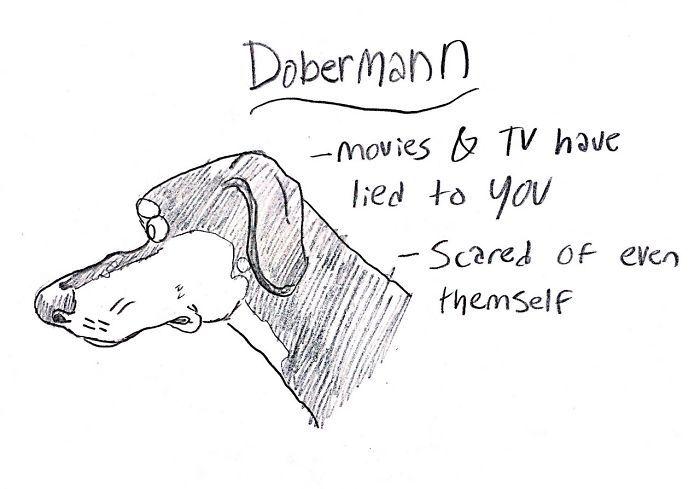 dog-breeds-traits-guide-cartoons-grace-gogarty-17-5a8a7c8f18789__700.jpg