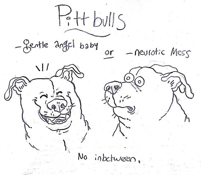 dog-breeds-traits-guide-cartoons-grace-gogarty-3-5a8a7c70d1add__700.jpg