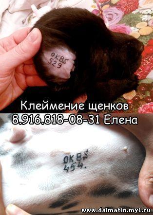 Объявления (не о продаже щенков)