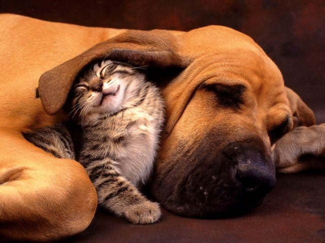 коти.jpg