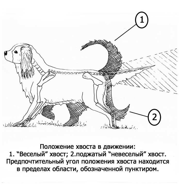 phoca_thumb_l_tail_big.jpg